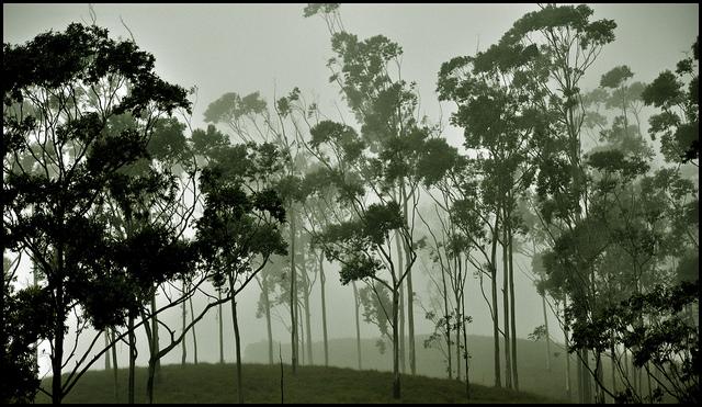 Eravikulam National Park