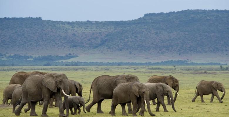 c92a0c59-50e0-4b29-9887-bb21b0c7e700.Kenya-maasaimaranationalreserve-elephants